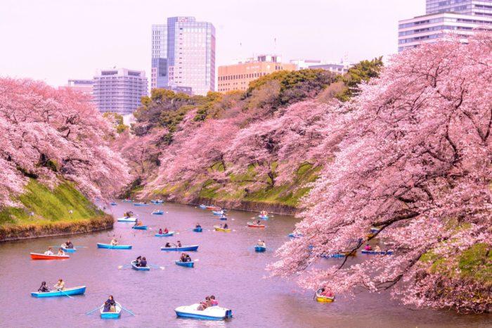 Отдых в Японии в апреле