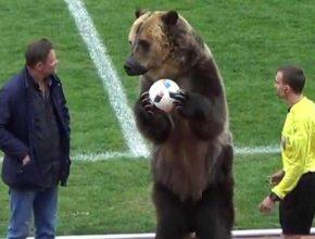 Медведь помог начать футбольный матч в России