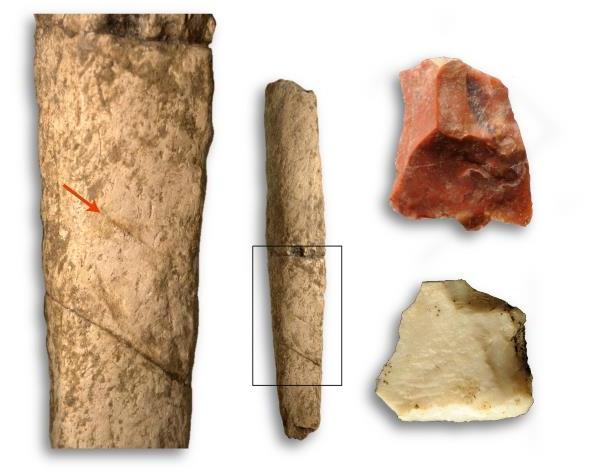 Найдены останки животных на Филиппинах